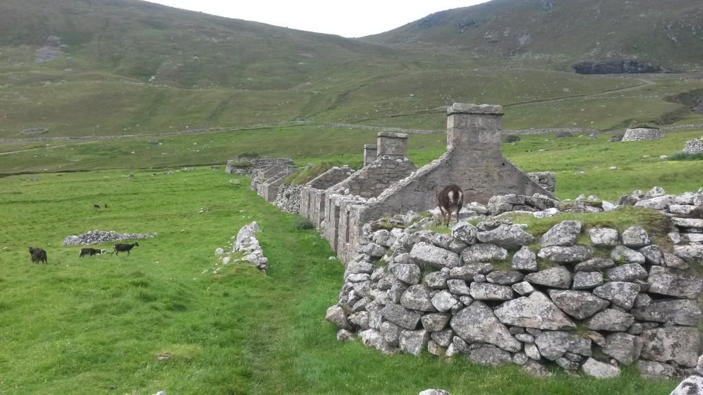 Kylän raunioita ja kääpiölampaita