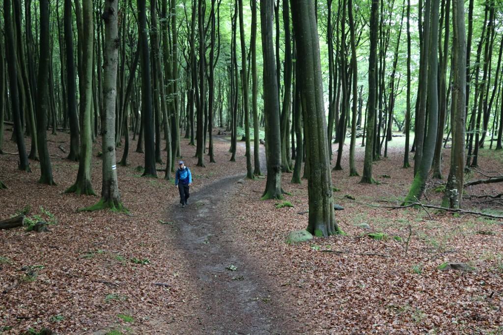 Metsää Jasmudin kansallispuistossa